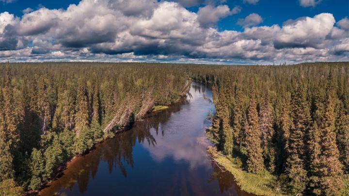 Исследователи WWF России отправятся в экспедицию по Архангельской области