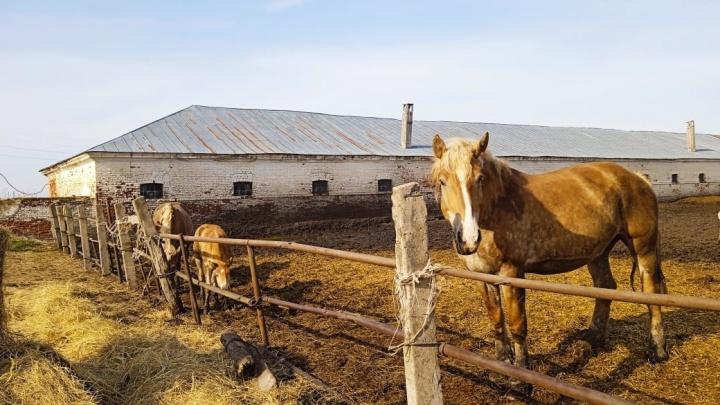 «У кобыл начались выкидыши». В Нижегородской области старейший конный завод может остаться без лошадей