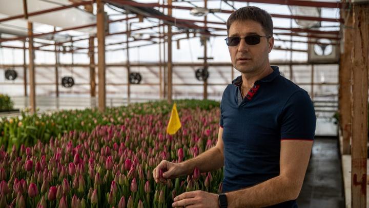 Король тюльпанов. Как сибиряк выращивает 300тысяч тюльпанов среди снегов — первые два года он терял по миллиону рублей