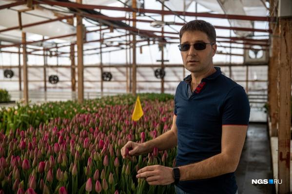 АлександрБурмантов говорит, что один из любимых сортов тюльпанов у новосибирцев — «барселона»