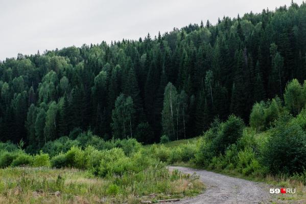 Мужчина пропал в деревне Зубки