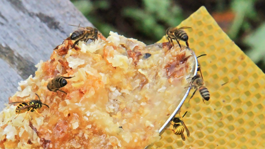 Спасибо аномальной жаре: в этом году башкирский мед стал еще вкуснее и слаще