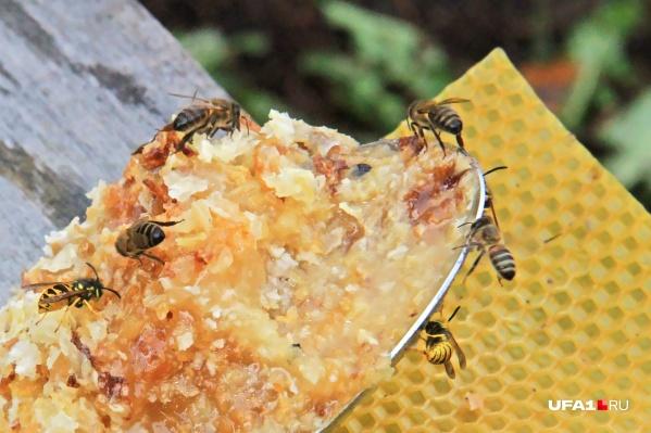 Башкирский мёд знаменит во всем мире