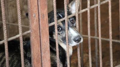 «Отрезались лапки»: что известно о живодере, расчленившем щенка у себя дома