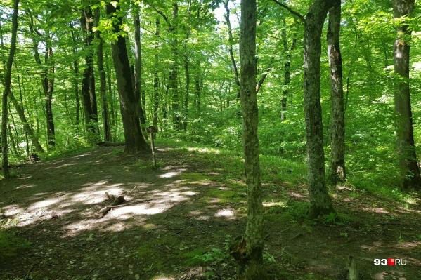 В лесу запрещено разводить костер
