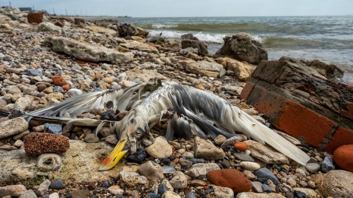 Найденные на пляже под Ейском животные погибли не от инфекции — Россельхознадзор