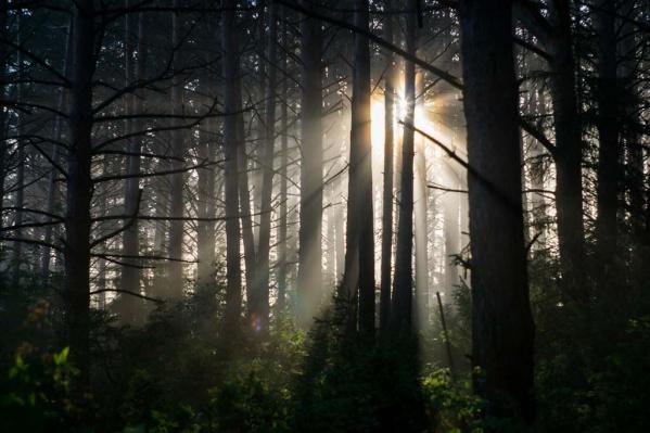 """За прошлый год в Омской области выгорело более <nobr class=""""_"""">16 тысяч</nobr> гектаров леса"""