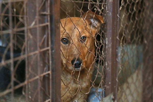 Как отчитались слвасти, заявки местных жителей на отлов бездомных псов передают спецхозяйствам еженевно