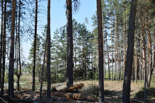 Власти города объяснили масштабную вырубку деревьев