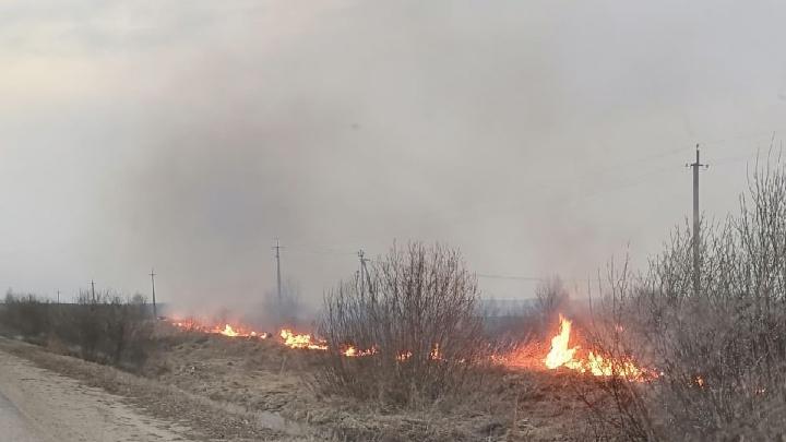 Власти — о пожарах в Ростовском районе: «Это поджог»