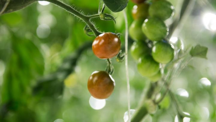 Манго, лимон и авокадо: что растет на балконе у читателей Е1.RU
