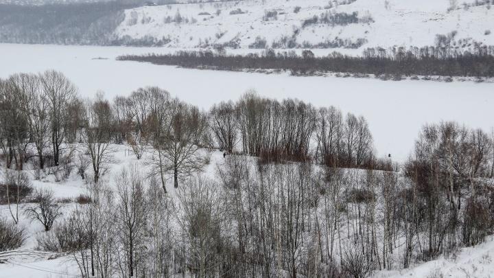 В Нижегородской области резко выросли объемы незаконной вырубки