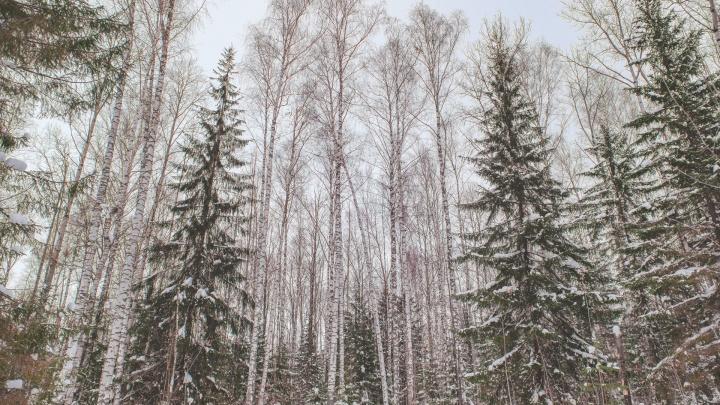 В Перми появятся две новые особо охраняемые природные территории, обе — в Мотовилихе