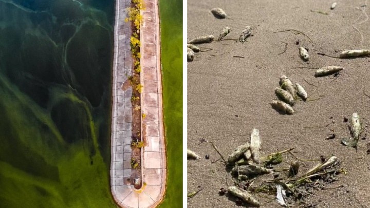 В Самарской области ученые связали гибель рыбы со сбросами сточных вод