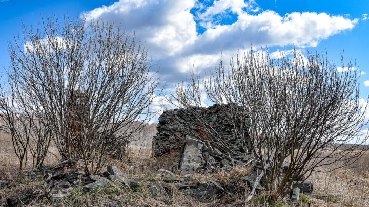 Двухметровая трава и полчища многоножек: репортаж из единственного в России радиоактивного заповедника