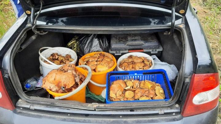 Полный багажник: жители области показали свои трофеи с тихой охоты