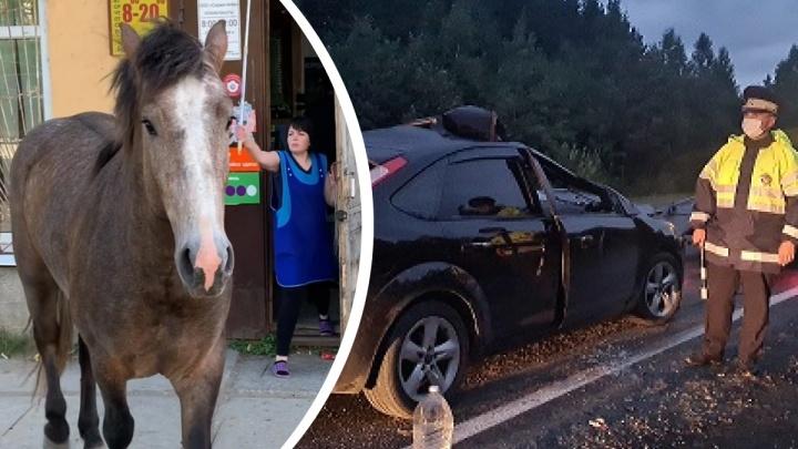 На Урале угнали табун лошадей. Один из коней попал под колеса: в ДТП пострадали женщина и ребенок