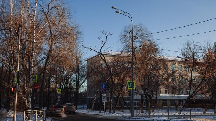 После обращения тюменца приостановили обрезку более 250деревьев поулице Хохрякова