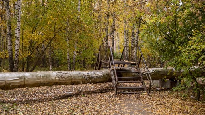 По мосту через теплотрассу: гуляем по самому шуршащему району Ярославля этой осенью