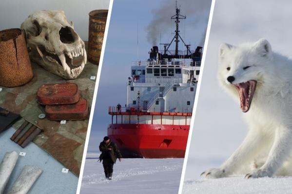 Арктика — настоящее нехожее поле для исследований совершенно разных ученых: от историков до биологов