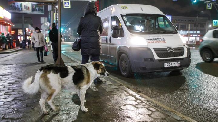 Кто-то явно решил переделать Волгоград: владелец маршрута обвинил чиновников в уничтожении пассажирских перевозок