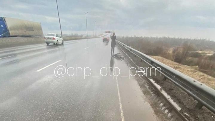 В Перми полиция разыскивает водителя, который насмерть сбил пешехода
