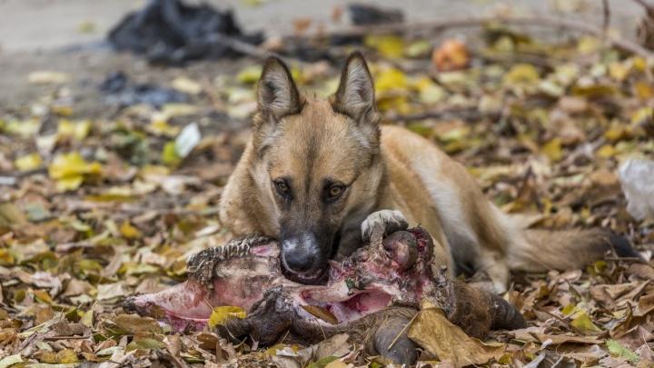 Смерть может спать на коврике у входа: какие животные в Волгограде и области чаще всего болеют бешенством