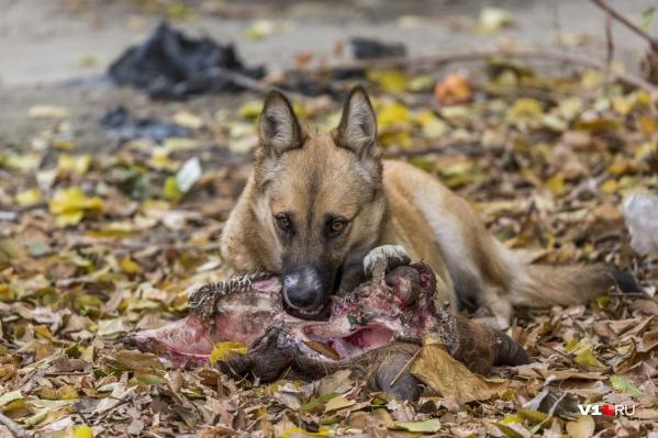 Среди заболевших животных нет ни одной бездомной собаки
