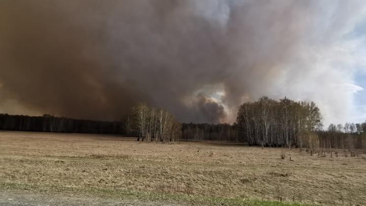 «Из окна уже видно, как всё горит»: в Челябинской области крупный лесной пожар подобрался к поселкам