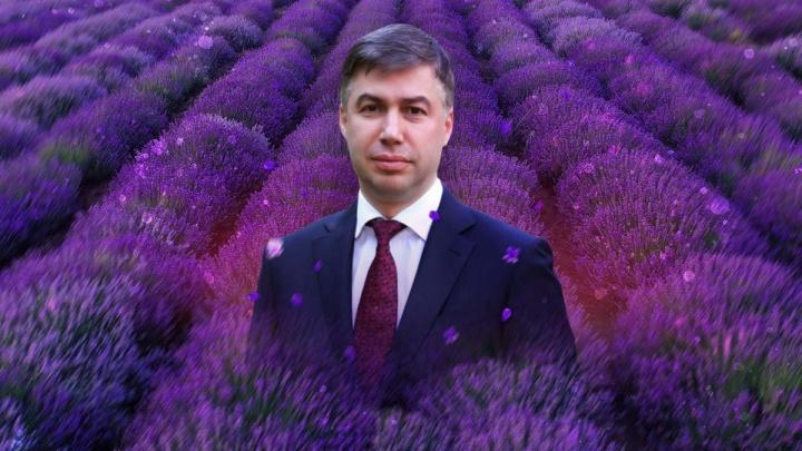 Власти решили засадить центр Ростова тысячами кустов лаванды