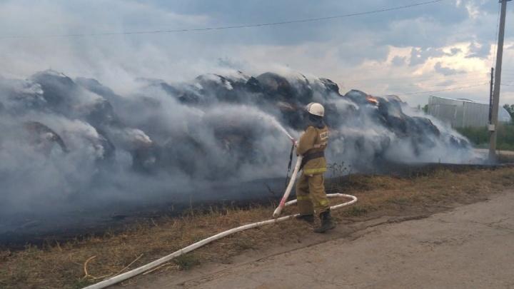 Эвакуировали скот и людей: появилось видео пожара на ферме в Самарской области
