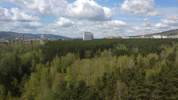 В Студгородке за два дня собрали 500 подписей против дороги на месте хвойного леса к элитному ЖК