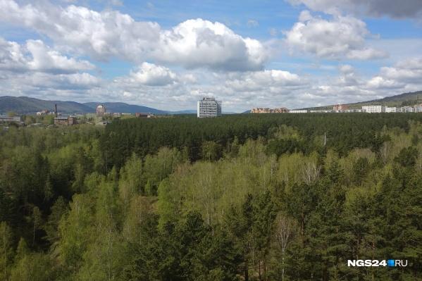 """Сейчас этот лес видно из окон на <nobr class=""""_"""">Киренского, 2и</nobr>. Дорога в планах проходит на месте хвойной части леса"""