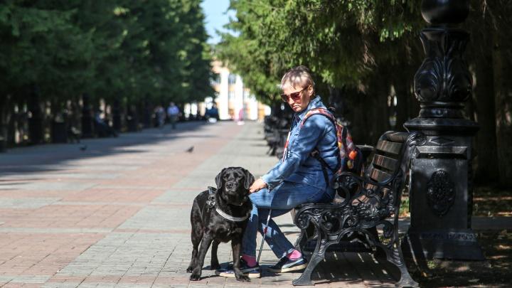 Собачникам больше не придется бродить по дворам: где в Уфе появятся площадки для выгула питомцев