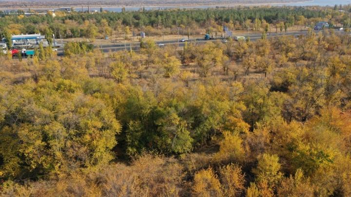 В Волгограде пустят под застройку лес, где ликвидировали двух террористов