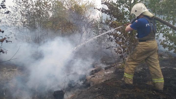 Видео: в Тольятти пламя «съело» 152 гектара леса в Центральном районе