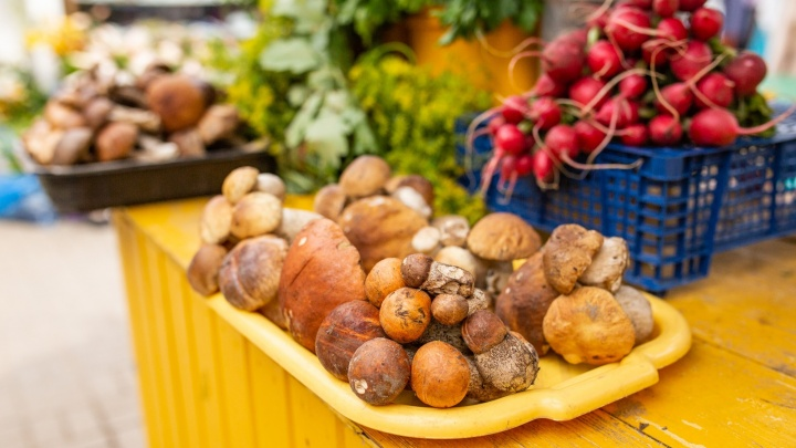 Когда в Ярославской области пойдут грибы: прогноз миколога