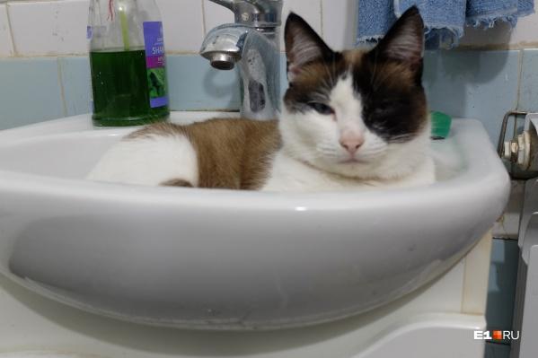Утечка воды произошла еще вчера, но проблему до сих пор не решили