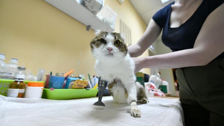 В Екатеринбурге коту без лап напечатают протезы на 3D-принтере