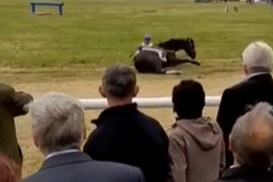 Как рассказали местные жители, нога лошади попала в яму