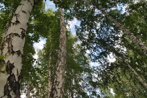 Сергей Минаев высмеял пост соцзащиты Зауралья, которая предлагала пенсионерам общаться с деревьями