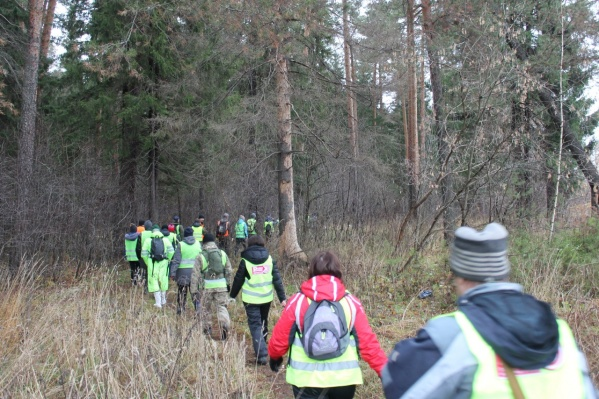 Отряд на поиске человека в лесу