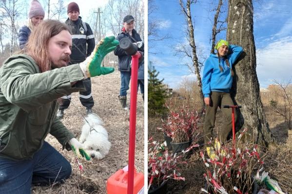 Энтузиасты высаживают акклиматизированные саженцы деревьев