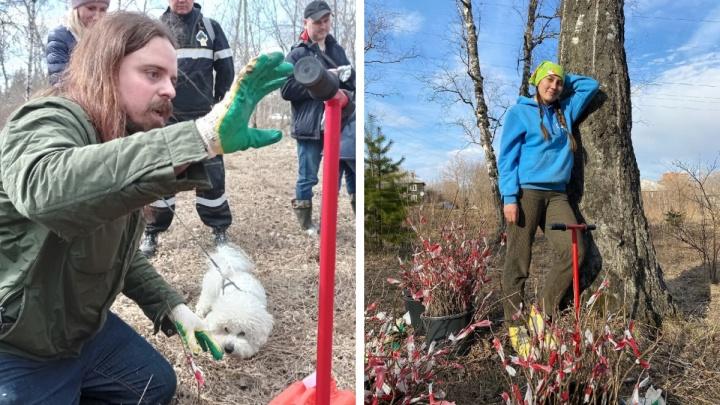 Волонтеры-лесоводы высаживают краснокнижные бобовые деревья в Студгородке