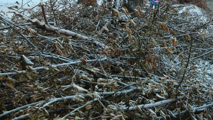 В Ворошиловском районе иномарки волгоградцев завалило рухнувшими с дерева ветками