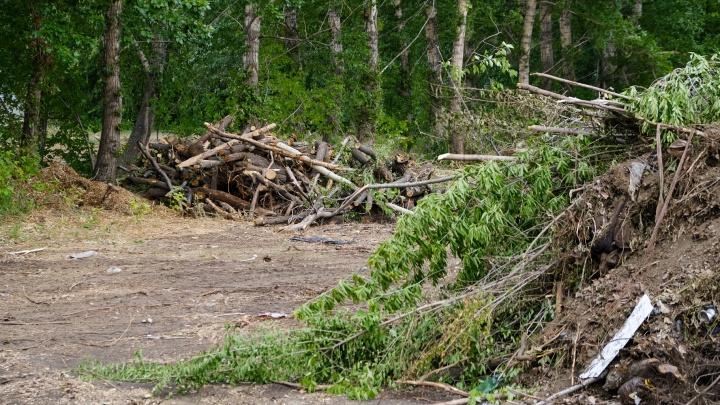 Удар по зелени. В центре Челябинска незаконно снесли деревья под школу бокса Сергея Ковалёва