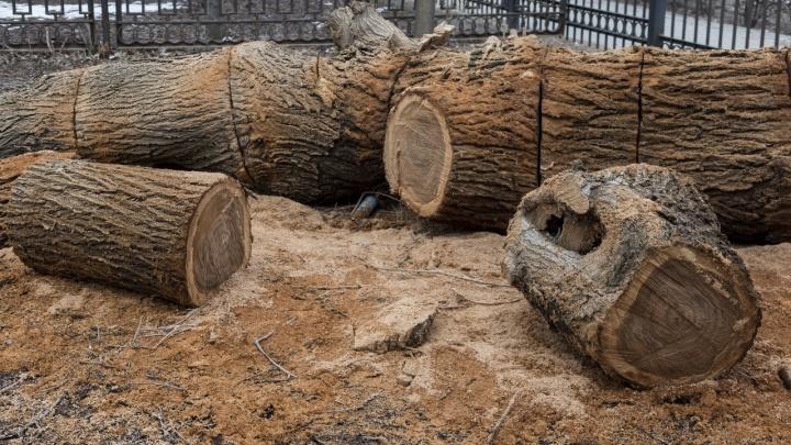 В Волгограде перекрыли дорогу из-за аварийных деревьев