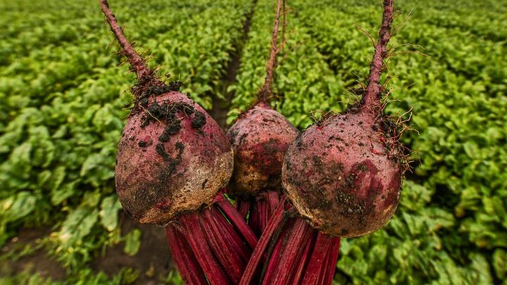 Кому навредят овощные диеты и в чём их польза — отвечают врачи