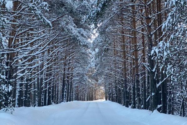 Холдинг «Титан» является генеральным поставщиком лесосырья на Архангельский ЦБК