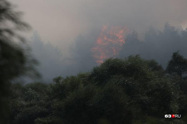 Пламя поднимается выше деревьев